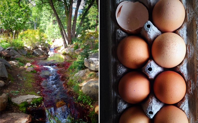 eggs_stream