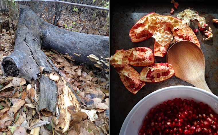 forest_log_pomegranate