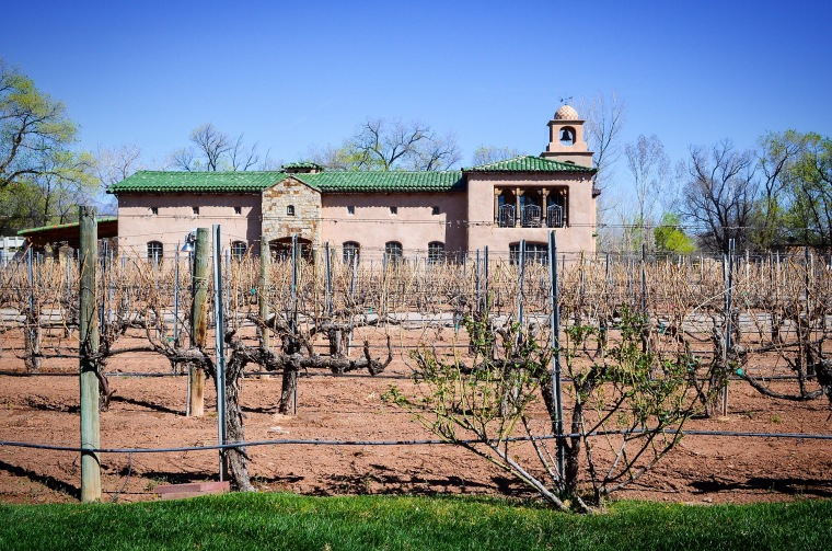 Casa Rondeña vineyard