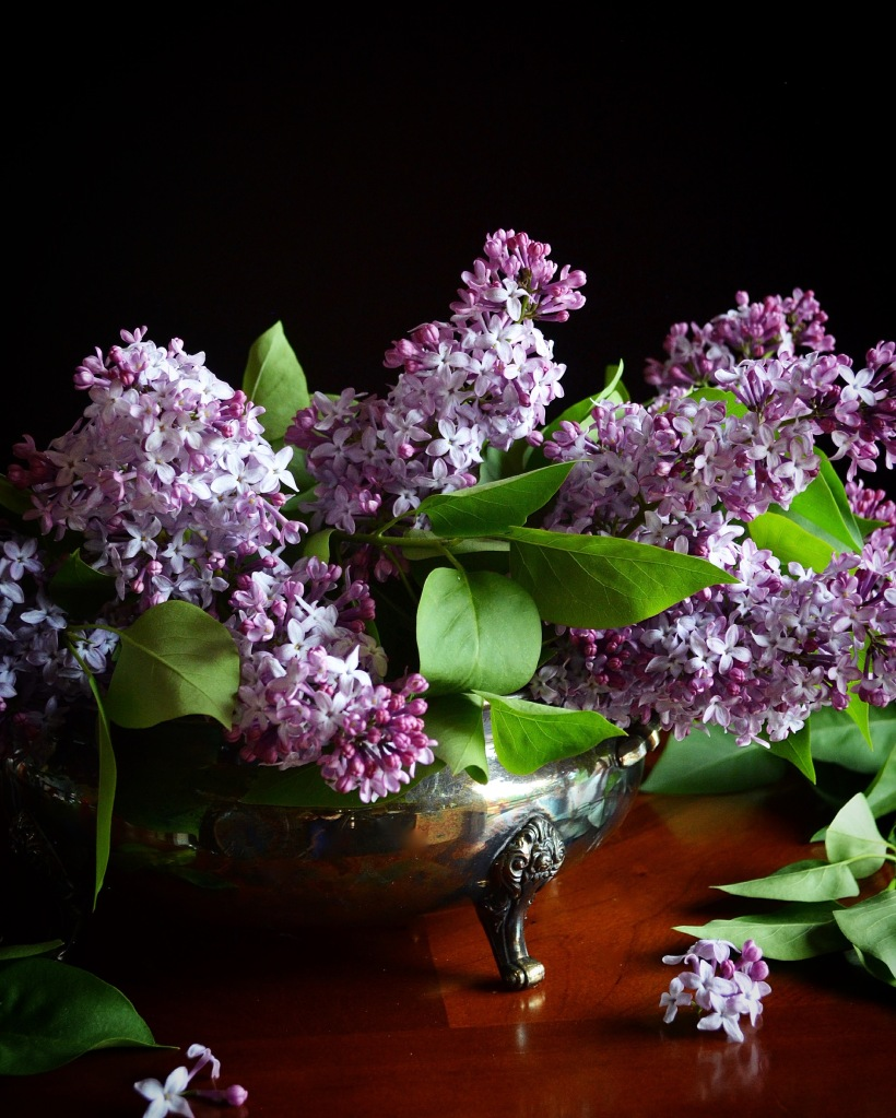 lilacs in silver bowl